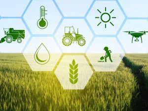 BOP Policy Note on Agriculture Sector